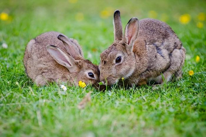 Des lapins pour lui enlever son mal de dos